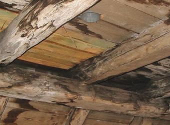 problematyka-01.-drwono-zaatakowane-grzybami-domowymi--które-mogą-wydzielać-mikotoksyny_ZDJ-1